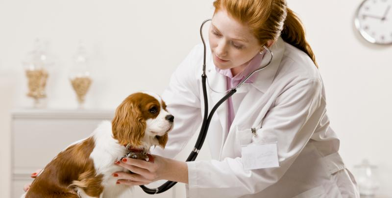 VETERINARY DOCTORS / VETERINARY TECHNICIANS The Netherlands